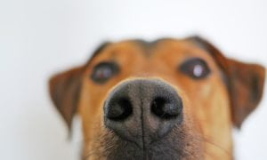How to Get Your House to Not Smell Like Your Pets